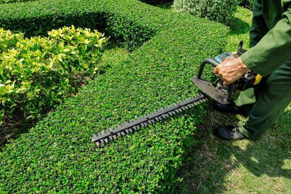 Lawn Pros has the shrub trimming and tree trimming Wichita services you need to keep your home or business beautiful.