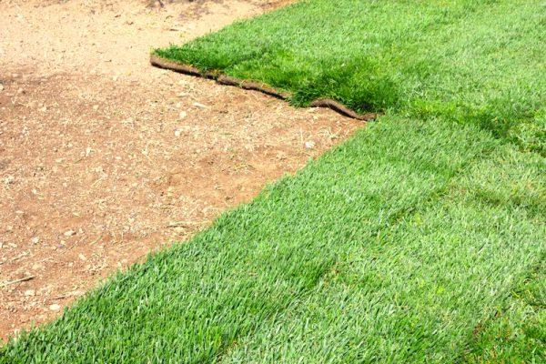 Laying sod is a quick way to see beautiful results and Lawn Pros have all the Sod Wichita expertise you need.