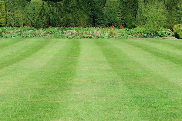 Lawn Pros can make your lawn mowing Wichita job less stressful so you can enjoy your yard.