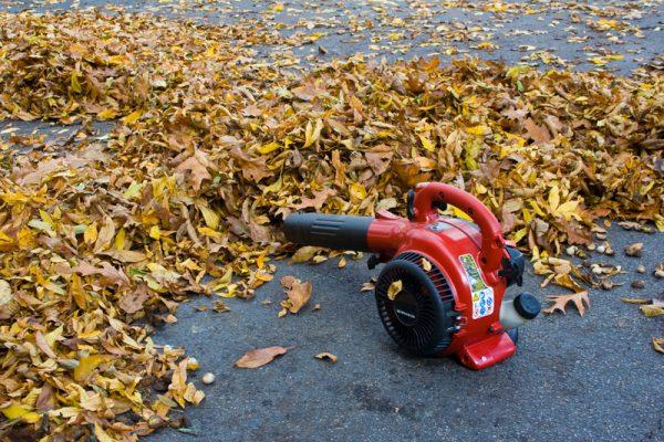 Lawn treatment for fall includes debris removal such as leaves.