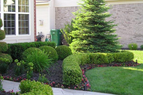 Our team of experts can help you with all your tree trimming Wichita and shrub trimming Wichita needs.