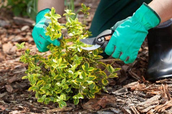 Bed Maintenance is an important part of keeping your yard beautiful.